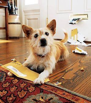 chien-anti-spam