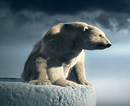pub-quercus-rechauffement-climatique